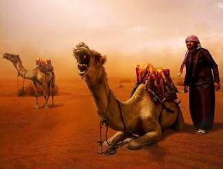 calatori in desert