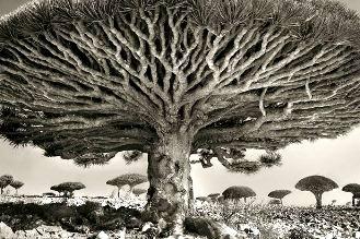 copac 1
