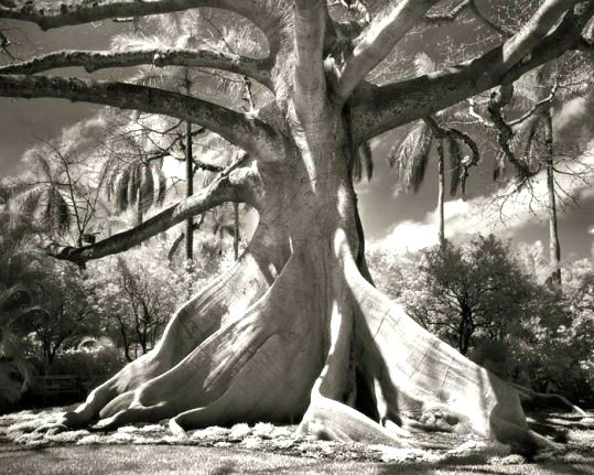 copac 2