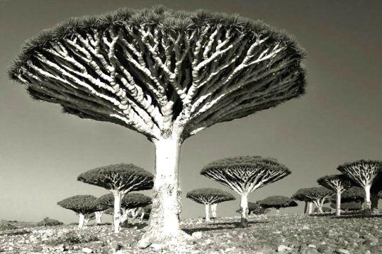 copac 7