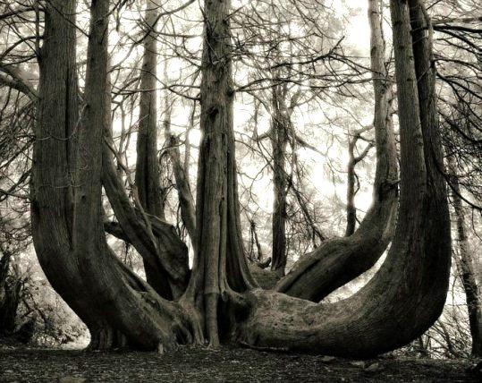 copac 9