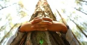 imbratisati copacii