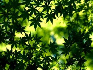 padure-verde
