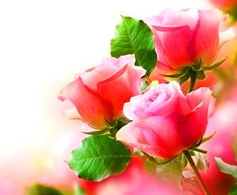 trandafiri 7