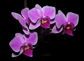Blestemul florii de orhidee - e posibil ca unele flori sa emane energii negative?