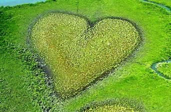 Bastinasii din Peru folosesc cu succes, de mii de ani, algele pentru a vindeca problemele de inima