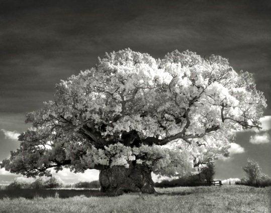 copac 4