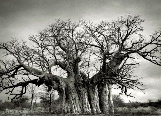 copac 5