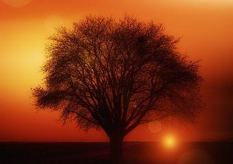 Contactul cu copacii: elimina energiile daunatoare si aduc energie pozitiva in trup