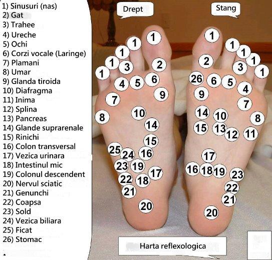 harta picior
