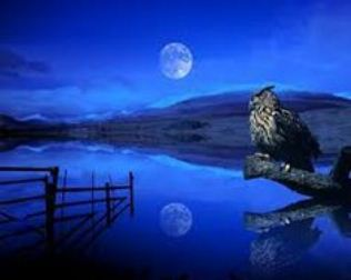 lac soarece luna bufnita