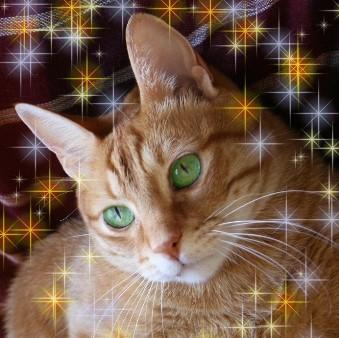 Pisicile si cainii pot vindeca bolile si neutraliza energia negativa a stapanilor lor!