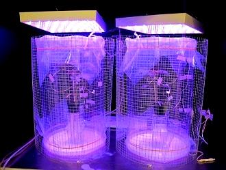 plante cyborg