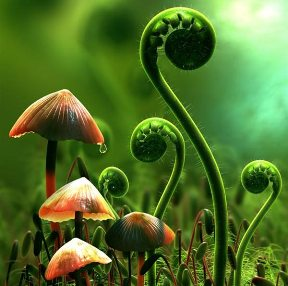 """Descoperire senzationala a oamenilor de stiinta: """"Plantele nu gandesc, dar pot fi influentate de gandurile noastre!"""""""