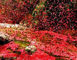 ploaie de flori