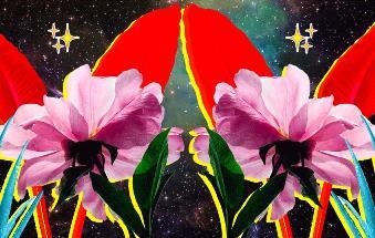 Zodiacul florilor: aflati totul despre voi, in functie doar de zilele de nastere